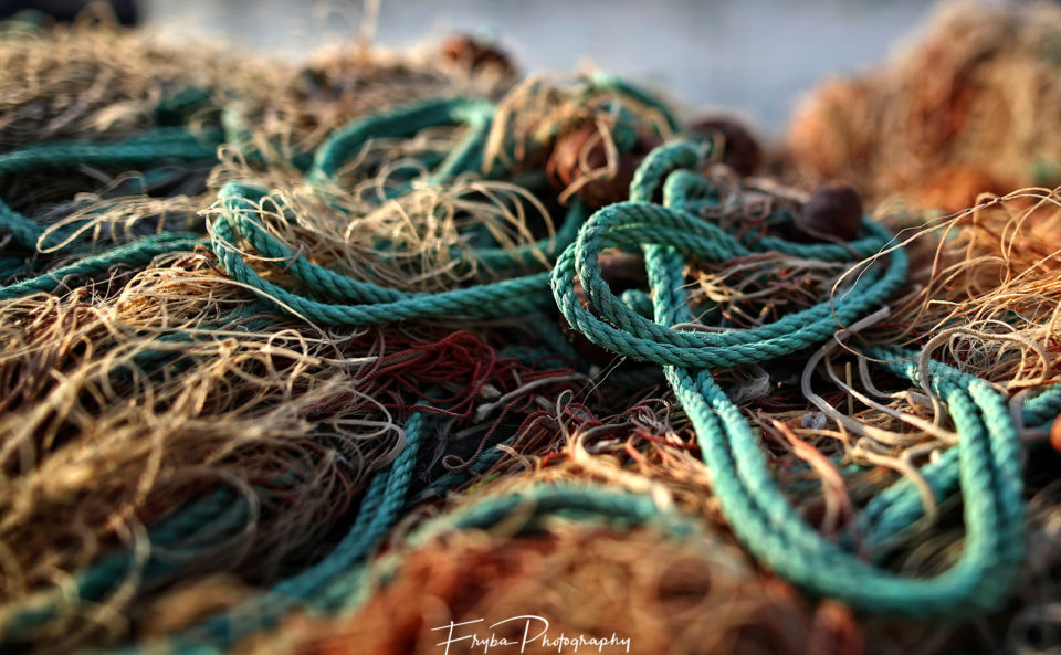 Seal-ropes-fisches